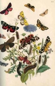 moths112a