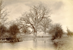 Henry Taunt. College Oak and College Pond, c1890